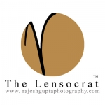 the-lensocrate